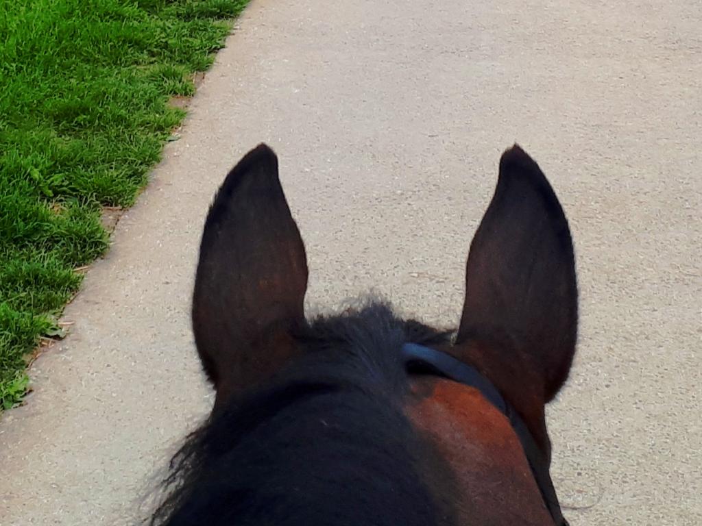 Pferdeohren braun